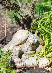 Tortoise Statue_DSC_4838