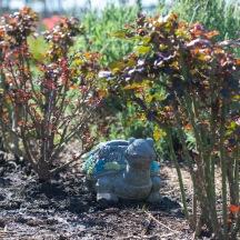 Tortoise Statue_DSC_4842
