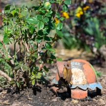 Tortoise Statue_DSC_4844