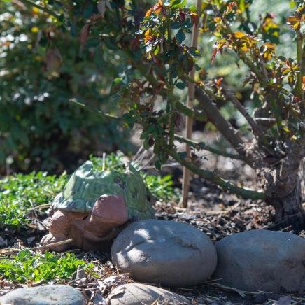 Tortoise Statue_DSC_4849