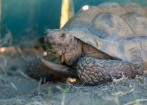 Tortoise_DSC_0536