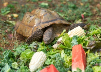 Tortoise_DSC_1769