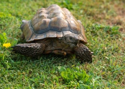 Tortoise_DSC_1776