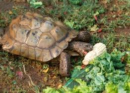 Tortoise_DSC_1779